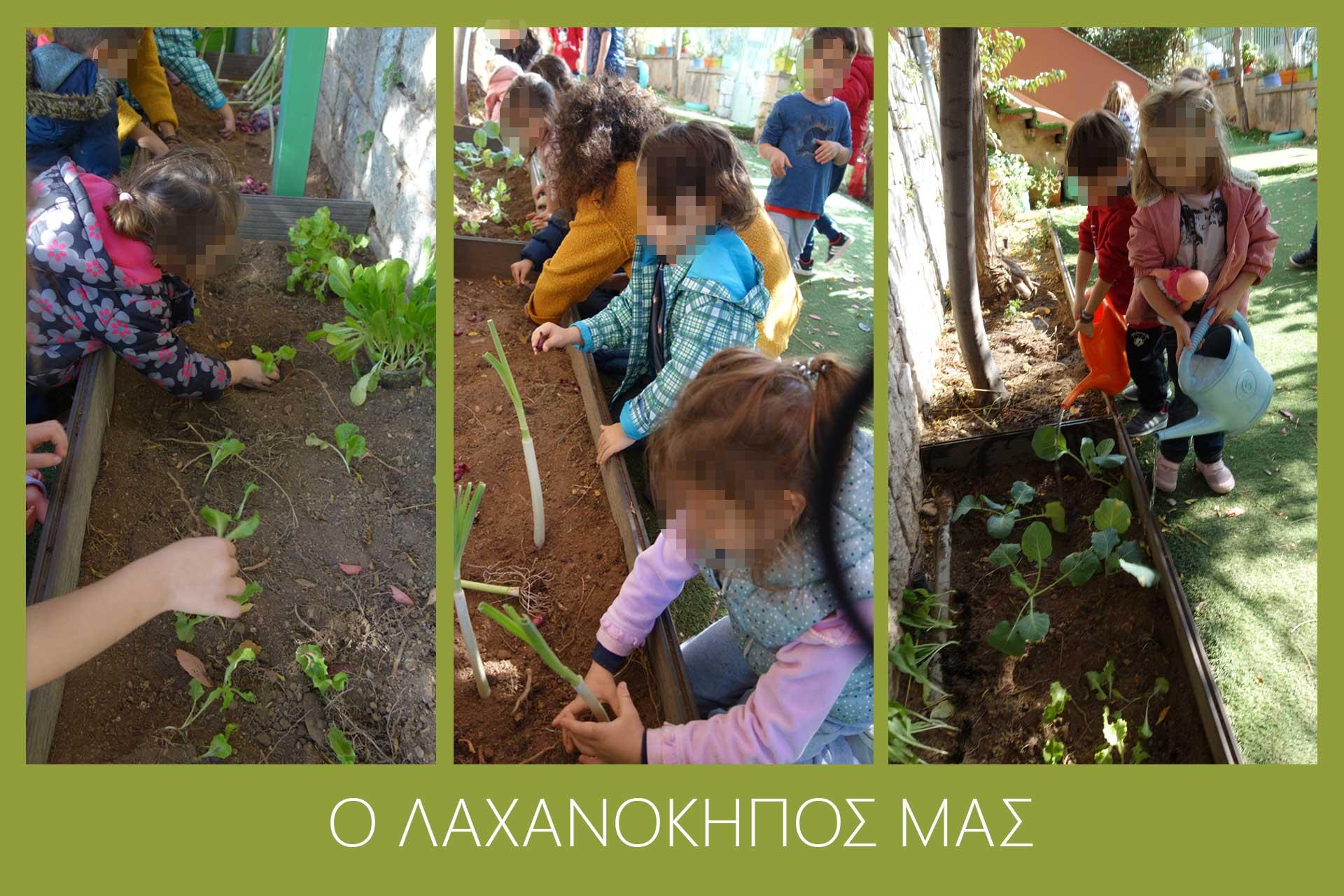 o_laxanokipos_mas